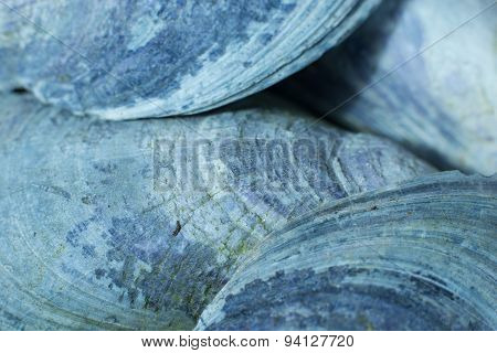 Blue mussels, background