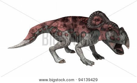 Dinosaur Protoceratops