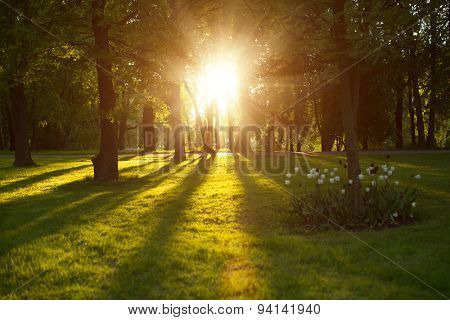 Beautiful nature at evening in spring forest trees with sun rays Concept of sun wonderland Summer scene Landscape in autumn season Sunlight background  Summertime, autumntine sun scene. Backlit. poster