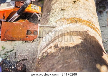 Logger Cutting Wood With Chainsaw To Make Firewood
