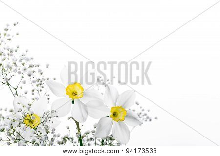 Spring floral border, beautiful fresh narcissus flowers