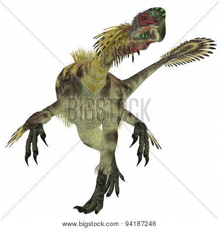 Citipati Male Dinosaur