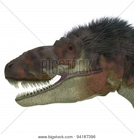 Daspletosaurus Dinosaur Head