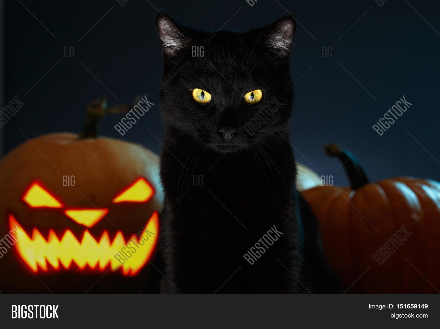 Portrait Black Cat Halloween Image & Photo | Bigstock