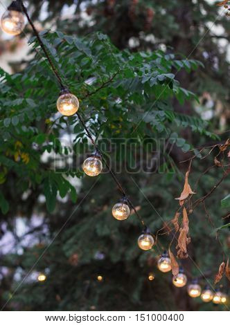 Decorative Electric Festoon Of Lighting Bulbs Hangs On Tree Branches