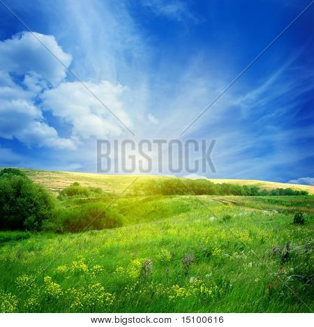 bloem veld