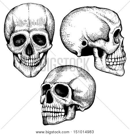 Hand drawn vector death scary human skulls collection. Skeleton head sketch with eyes and teeth