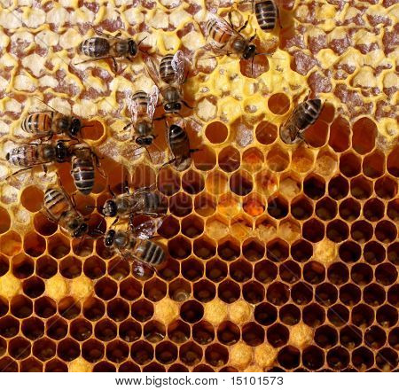 poster of honey cells and working bees