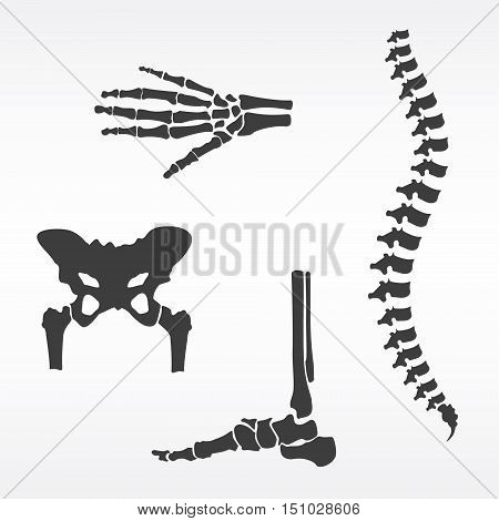 Vector illustration parts of human skeleton. Human joints vector set. Orthopedic hip bone spine hand skeleton and foot bone symbols. Rehabilitation