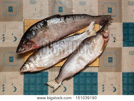 Fresh-caught marine Whitefish with silvery scales on chopping board.