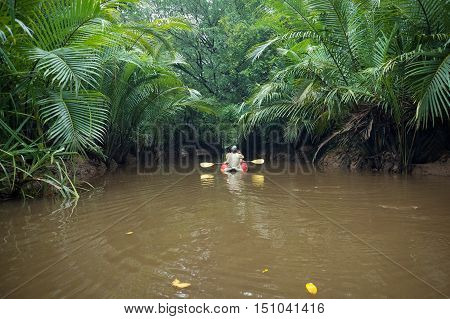 Kayaking through lush green jungle and wild mangrove swamp at Klong Sung Nae Little Amazon Phang Nga - Thailand