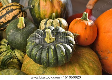 Winter squashes and pumpkins heirloom varieties group