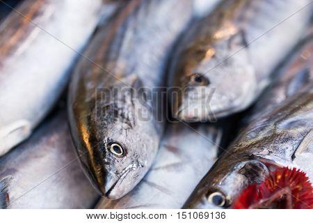 Fresh Bonito Fishes, Fish Market, Fish Sessions