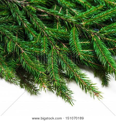 Christmas card with fir tree branch isolated on white background with copy space for text. Happy New Year and Christmas