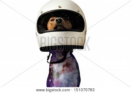 Close up shot of a cute basenji dog in a motorcycle helmet with starry skies projected on it isolated on white, double exposure