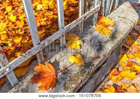 Orange and yellow fallen leaves on the fence at autumn.
