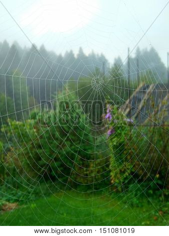 in the early morning under the roof of the house spider wove a web of