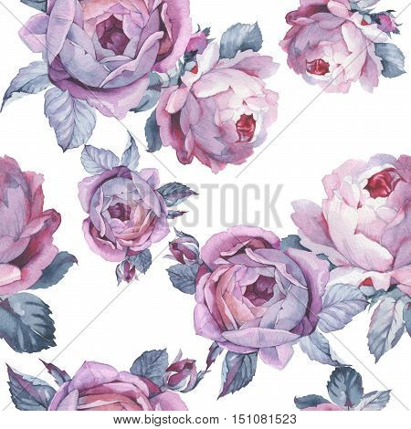 Wildflower rose flower pattern in a watercolor style isolated. Full name of the plant: rose, hulthemia, rosa. Aquarelle wild flower could be used for background, texture, wrapper pattern, frame or border.