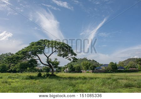 Serene landscape photo of tree in vast grasslands with blue sky and clouds pretty exotic.