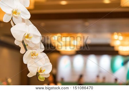 Beautiful spring blooming tree gentle white flowers fresh cherry blossom border on green soft focus background spring time nature