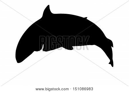 Silhouette of a dangerous shark showing teeth viewed from the side. Isolated on white background.