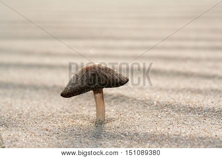 Fungus Growing On Sand