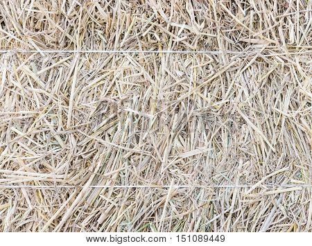 The texture of haystack with white rope for the cattle in the countryside farm.