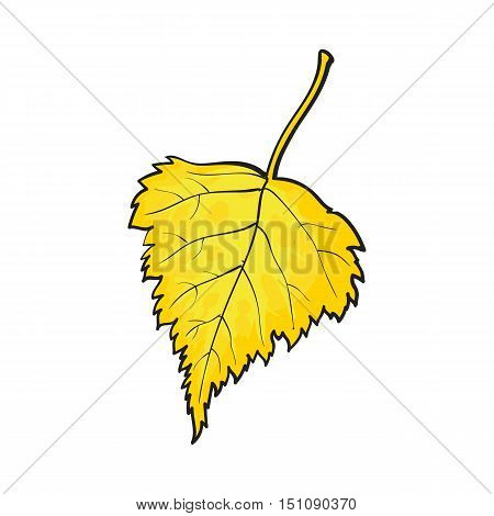 Beautiful yekkiw colored autumn birch leave, vector illustration isolated on white background. Botanical drawing of a fallen yellow birch leaf, fall season, autumn decoration element