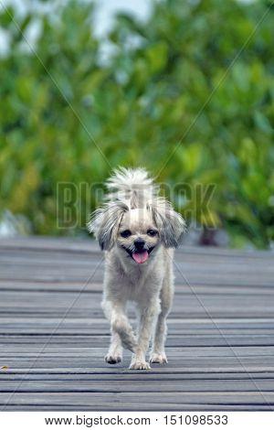 Dog So Cute Travel At Mangrove Forrest (thung Prong Thong)
