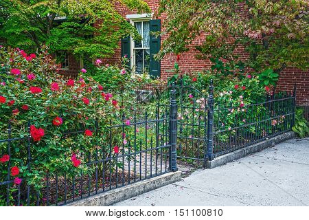 A late Summer rose garden along this old iron fence in historic Jim Thorpe Pennsylvania.