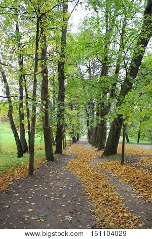 Small pathway between green trees with orange leaves pattern on the ground at the national park. Autumn fall beautiful colorful landscape nature background. Outdoor activity, recreation, walk concept