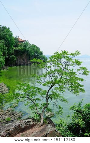 A small tree over leaning over Lake Tai Tai hu in Wuxi China on a sunny day in Jiangsu province.
