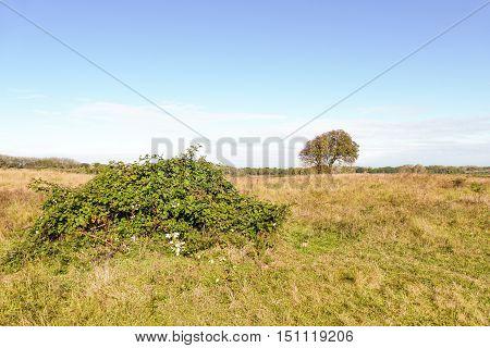 Landscape with bramble in nature Lentevreugd in Wassenaar Netherlands.