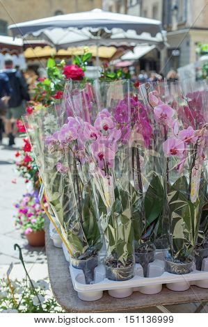 Orchids in Aix-an-Provence market, Provence, France .