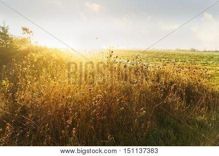Golden dawn on the edges of a farm field.