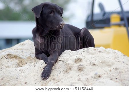 Black dog lying on a pile of sand for construction.