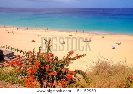 View on the beach Playa de Morro Jable with golden sand blue water of the Atlantic Ocean and red flowers closed to the beach. Location - the Canary Island Fuerteventura Spain.