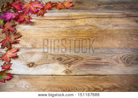 Thanksgiving greeting with fall maple leaves on rustic wooden background. Thanksgiving background with seasonal vegetables and fruits. Copy space
