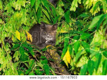 gray cat sitting on a tree branch animal nature