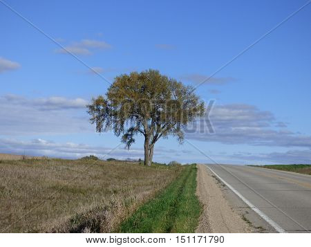 A lone Tree against a party cloudy sky along side a country road.