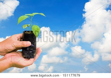Hand holding small young tree on blue sky.