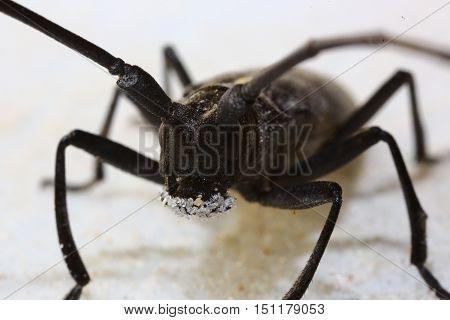 Nature, animals, insects, fauna, beetle, beetles, bark beetles, predators, variety, summer, barbel