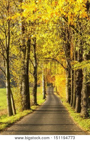 Autumn alley. Alley in autumn gold-colored trees
