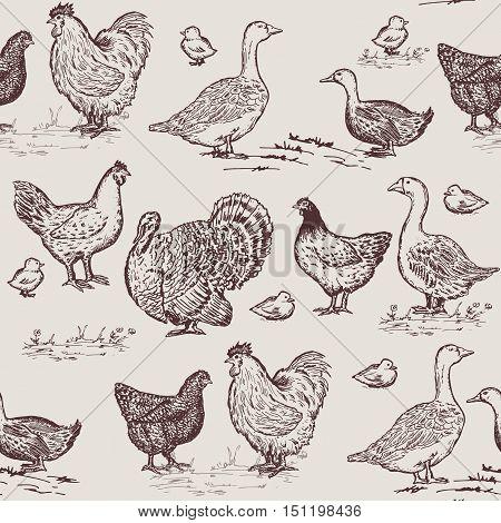 Farm birds seamless pattern. Chickens geese ducks turkey packaging farm products hand drawn vector
