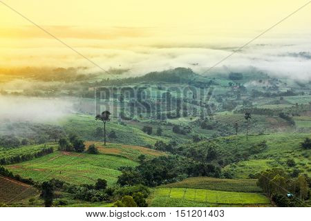 beautiful scenary valley of mountain at sun rising giving a beautiful color on the mist in the field