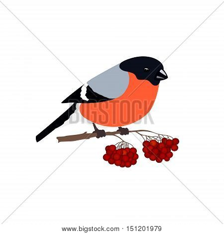 Bullfinch Isolated on White Background, Bird Bullfinch Sitting on a Branch with Bunches of Rowan, Merry Christmas and Happy New Year, Vector Illustration
