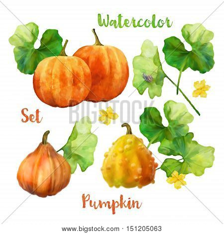 Watercolor pumpkin painting set. Orange pumpkins with leaves on white background