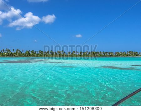 Coconut palms on the Canto de la Playa, Saona Island in East National Park, Dominican Republic. Canto de la Playa is one of the most popular tours starting from Bayahibe known for its natural pools.