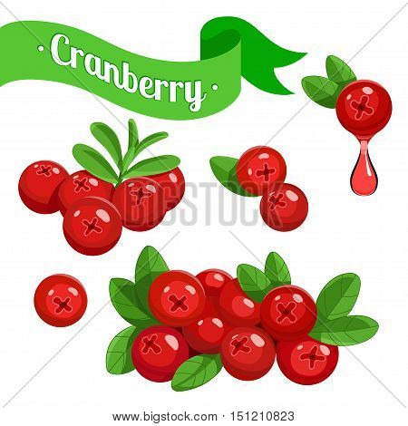 Colorful vector branch of Cranberry and juice drop. Medicinal berry. stock vector illustration of Cranberry for food and cosmetic label and banner
