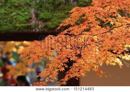 Fall Season At Kyoto Temple